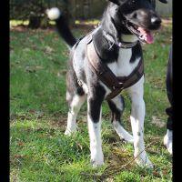 tierschutzhund-odin