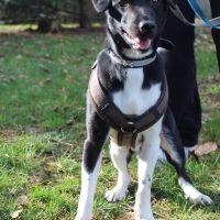 tierschutzhund-odin2