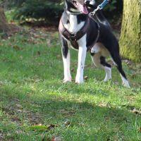 tierschutzhund-odin3
