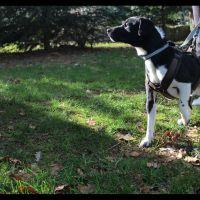 tierschutzhund-odin4