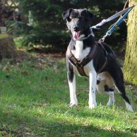 tierschutzhund-odin5